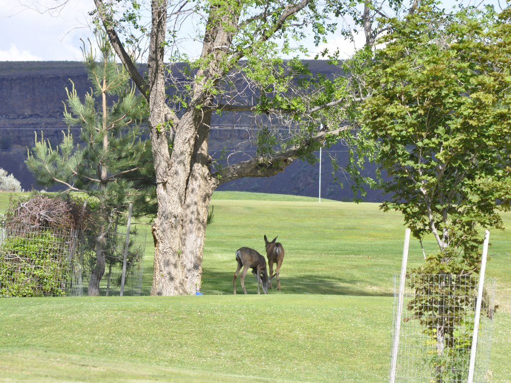 Wildlife Near The Clubhouse